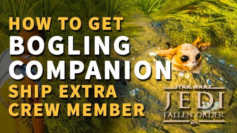 how to get bogling companion