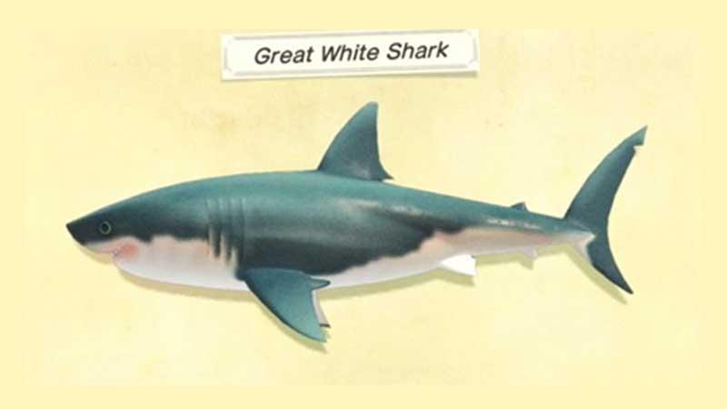 great-white-shark-acnh