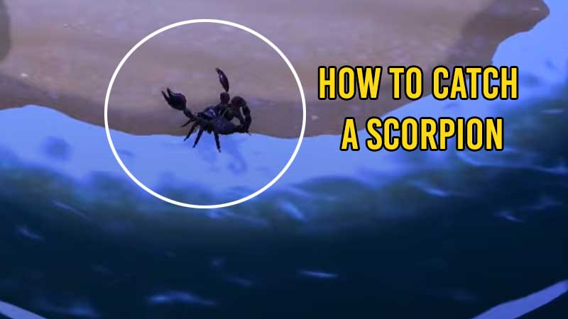 how-to-catch-scorpion-acnh