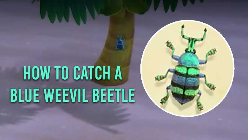blue-weevil-beetle-animal-crossing-new-horizons