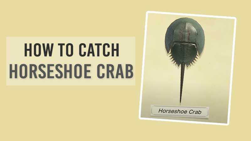 horseshoe-crab-in-acnh