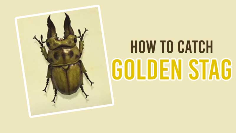 how-to-catch-golden-stag-in-acnh
