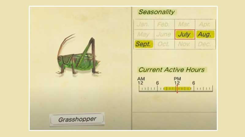 how-to-catch-grasshopper-in-acnh