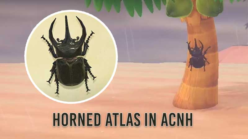how-to-catch-horned-atlas-in-animal-crossing-new-horizons
