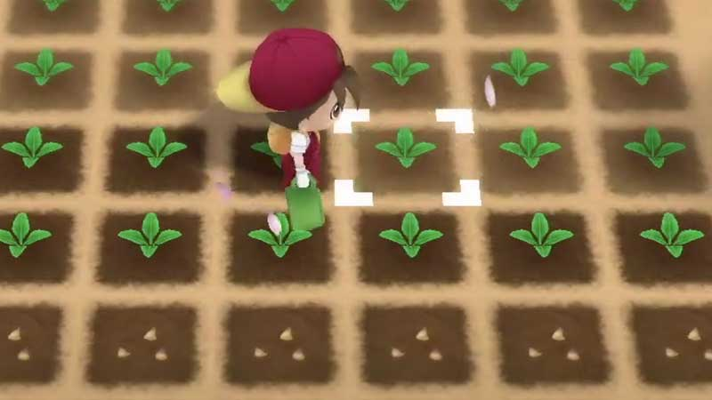 how-to-grow-crops-in-Story-of-Seasons-Friends-of-Mineral-Town