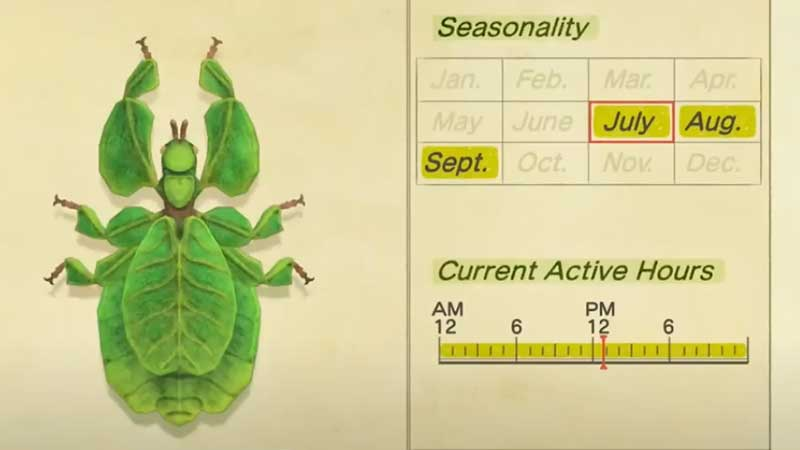 walking-leaf-how-to-catch
