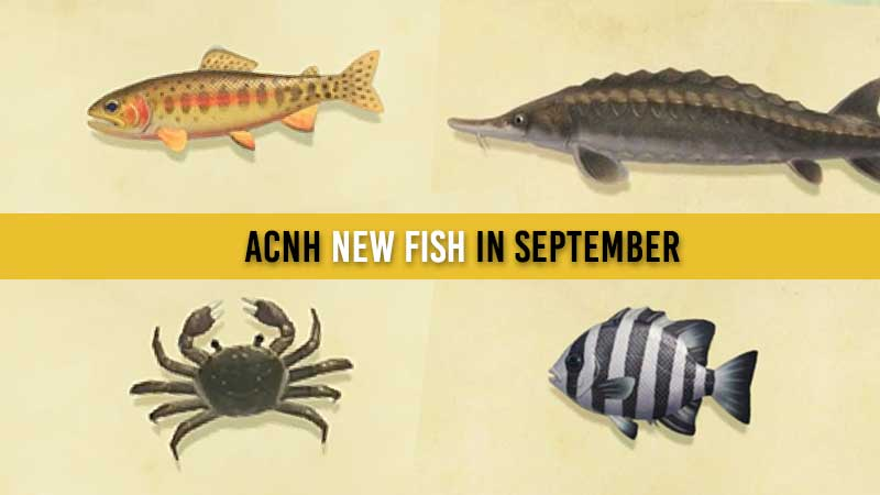 acnh-new-fish-in-september-list