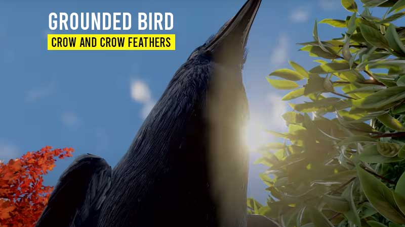 grounded-crow-how-to-use-crow-feathers