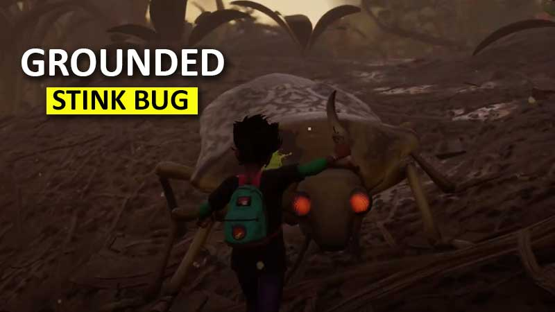 grounded-stink-bug-location-how-to-kill