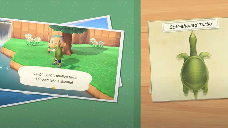 how-to-catch-soft-shelled-turtle-animal-crossing-new-horizons