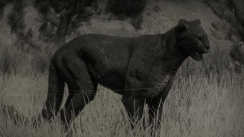 RDR2 Online Legendary Cougar Location