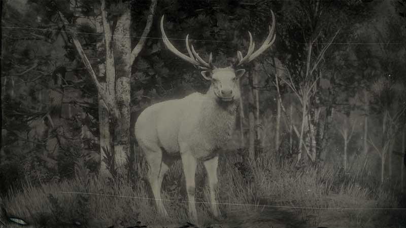 legendary elk location rdr2