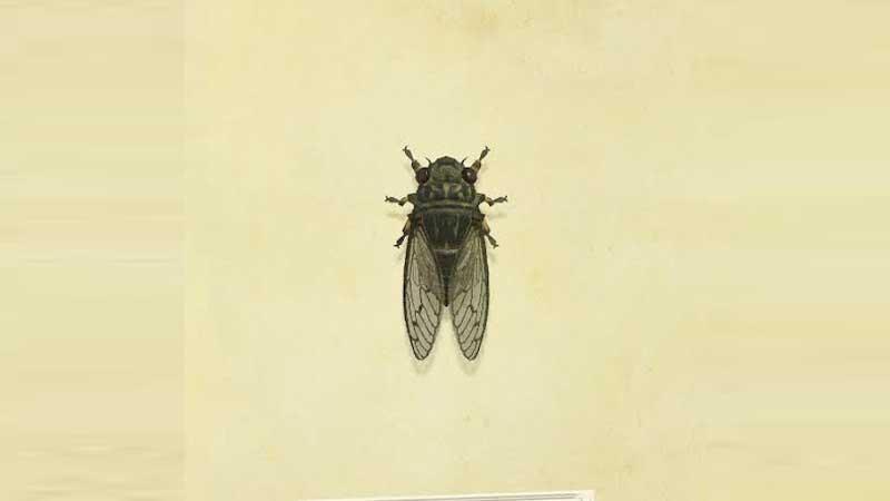 Rare Bug Walker Cicada Location