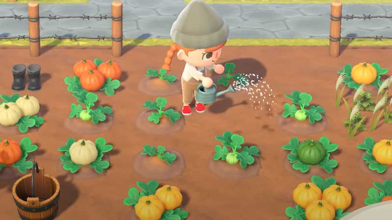 acnh-pumpkins-guide-grow-harvest-plant-animal-crossing-new-horizons