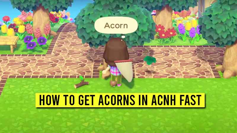 How To Get Acorns In Acnh Quickly Acorn Diy Crafting Recipes