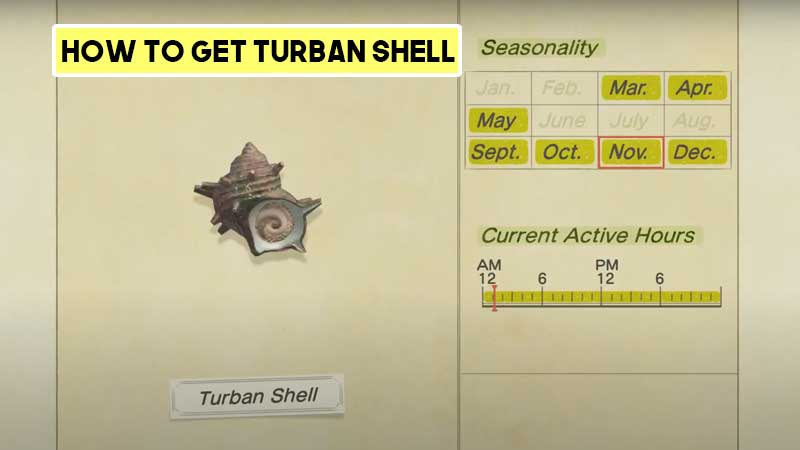 animal-crossing-new-horizons-turban-shell