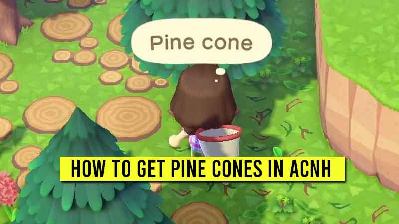 how-to-get-pine-cones-in-acnh