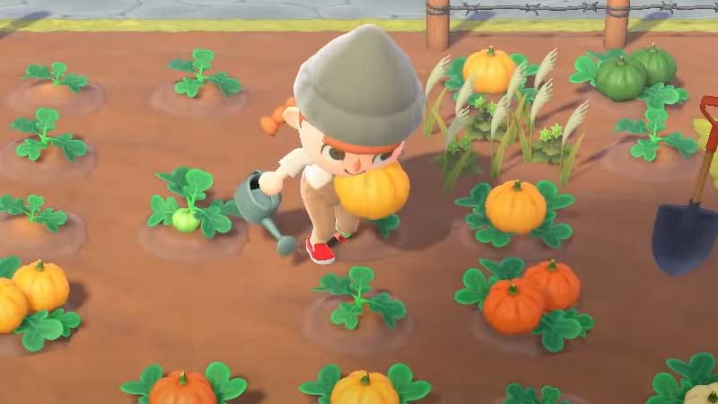 how-to-harvest-pumpkins-animal-crossing-new-horizons
