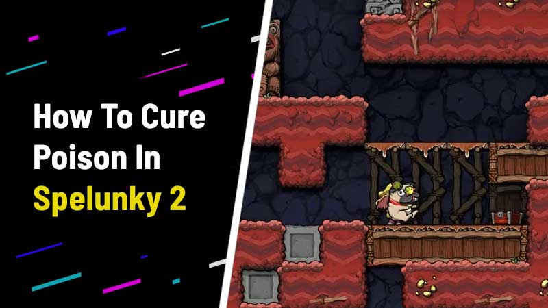 spelunky-2-how-to-cure-poison-remove