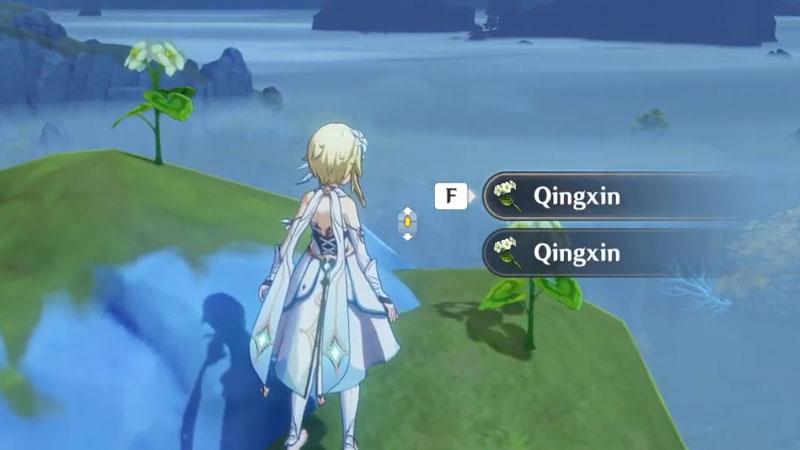 where to find qingxin in genshin impact