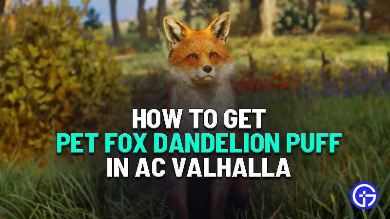 how to get pet fox in assassins creed valhalla