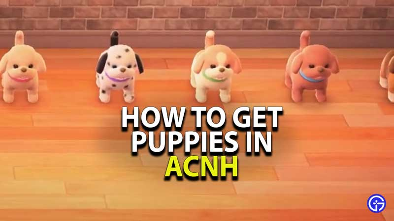 how-to-get-puppies-acnh-animal-crossing-new-horizons