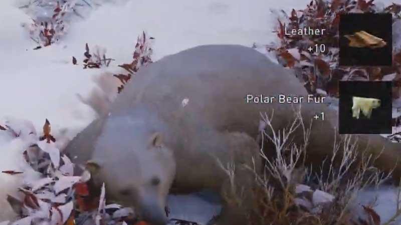 how-to-kill-polar-bear