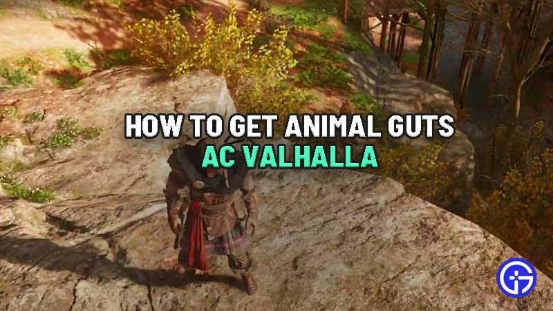 where-to-find-animal-guts-ac-valhalla