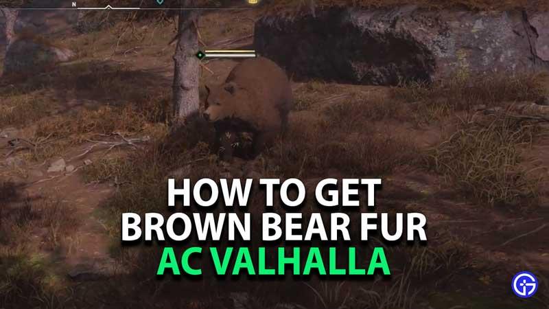 where-to-find-get-brown-bear-fur-assassins-creed-valhalla