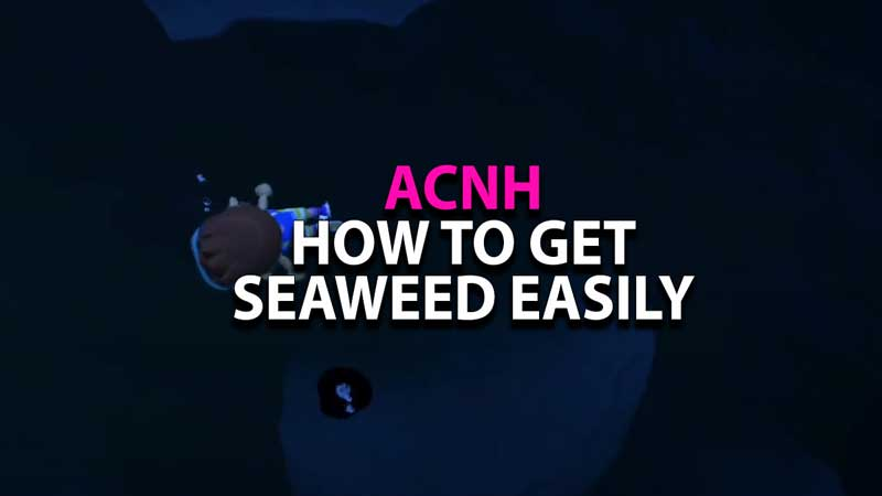 where-to-find-seaweed-animal-crossing-new-horizons