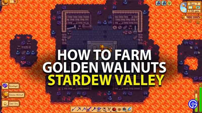 how to find golden walnuts in stardew valley