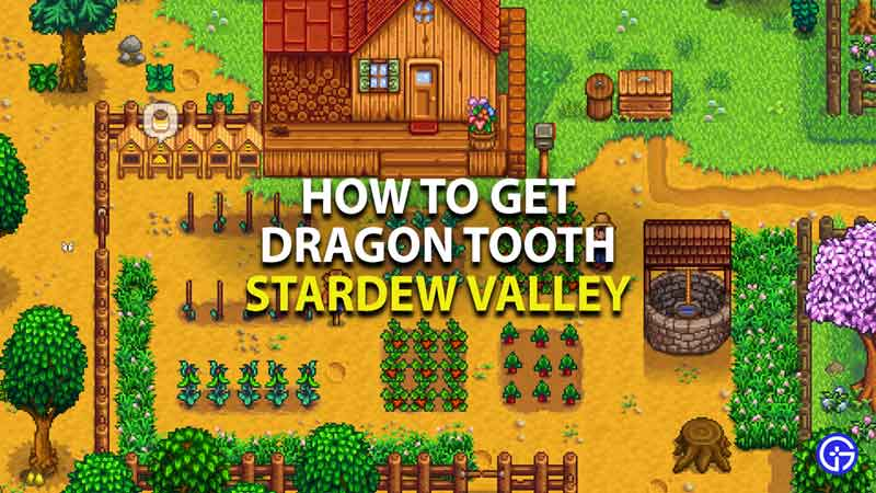 how to get dragon tooth in stardew valley
