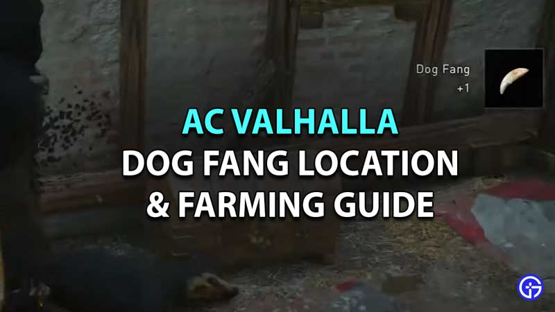 where to find dog fang assassins creed valhalla