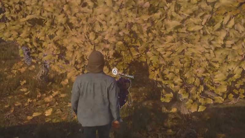 How to Harvest Grapes in Hitman 3
