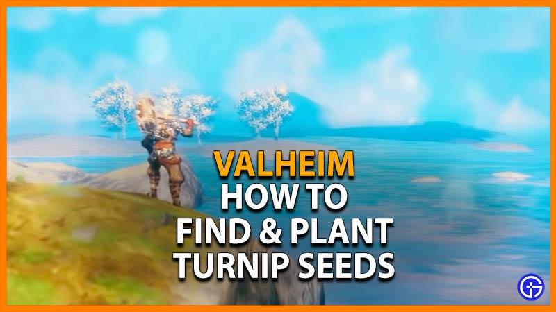 Valheim Turnip Seeds