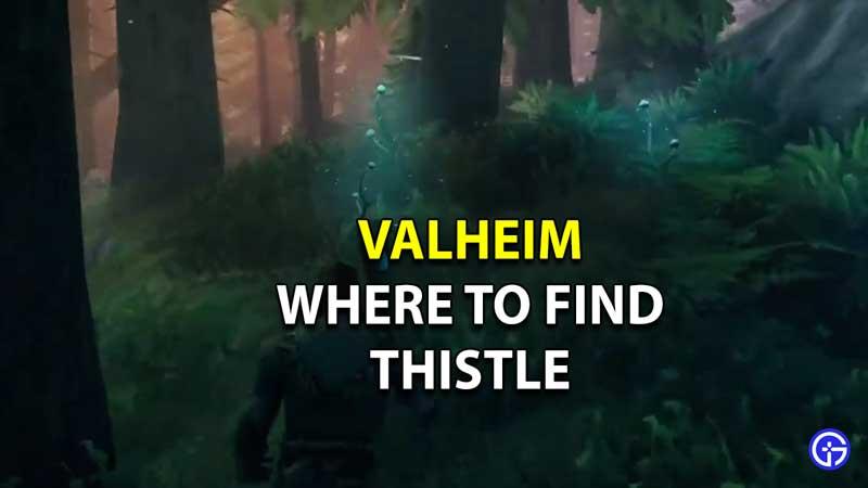 Where To Find Thistle In Valheim