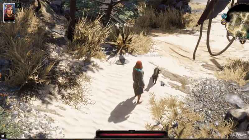 how to keep black cat safe in divinity 2