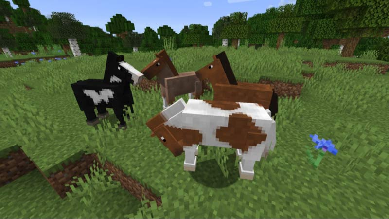 How to breed Horse in Minecraft?