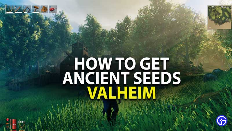 how to get ancient seeds in valheim