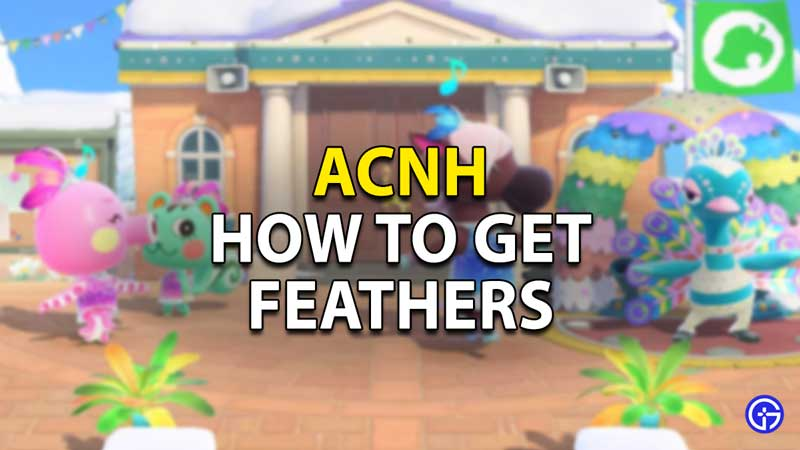 How to Get Feathers in ACNH