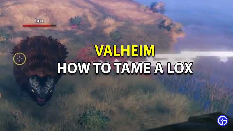How To Tame Lox In Valheim