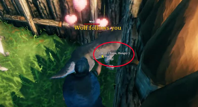 How to Tame Wolves in Valhiem?