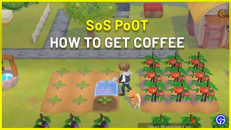 How To Get Coffee In Story Of Seasons Pioneers Of Olive Town