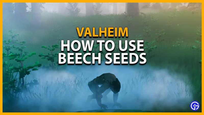 Valheim Beech Seeds