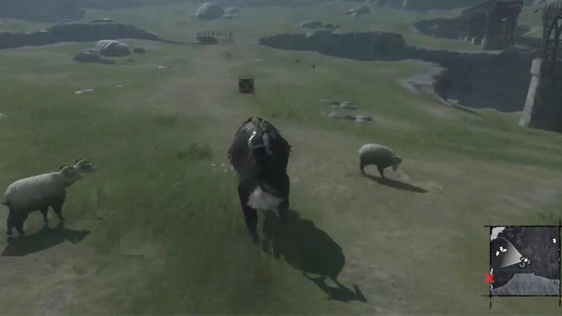 Ride A Boar