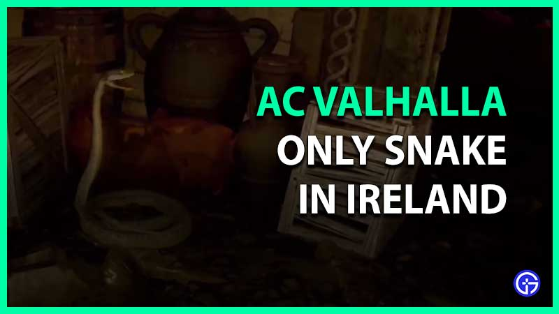 where to find and kill only snake in ireland