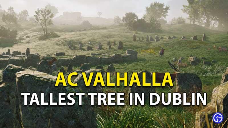 Tallest Tree In Dublin AC Valhalla Spider Clues Wrath Of Druids