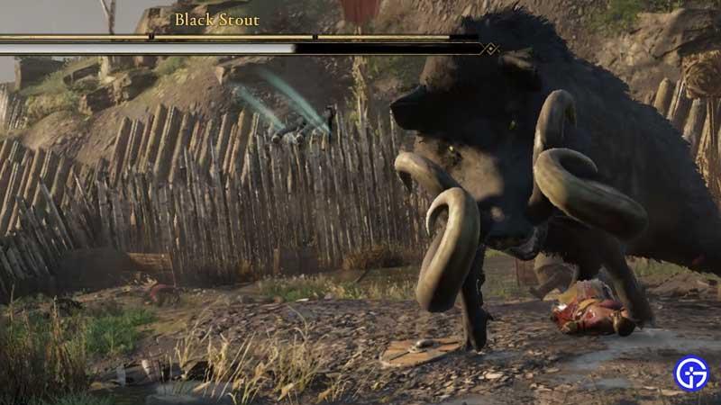 black stout wrath of the druids