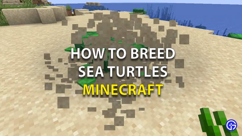 How To Breed Sea Turtles