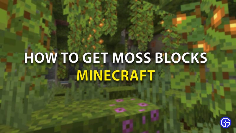 How To Get Moss Blocks In Minecraft